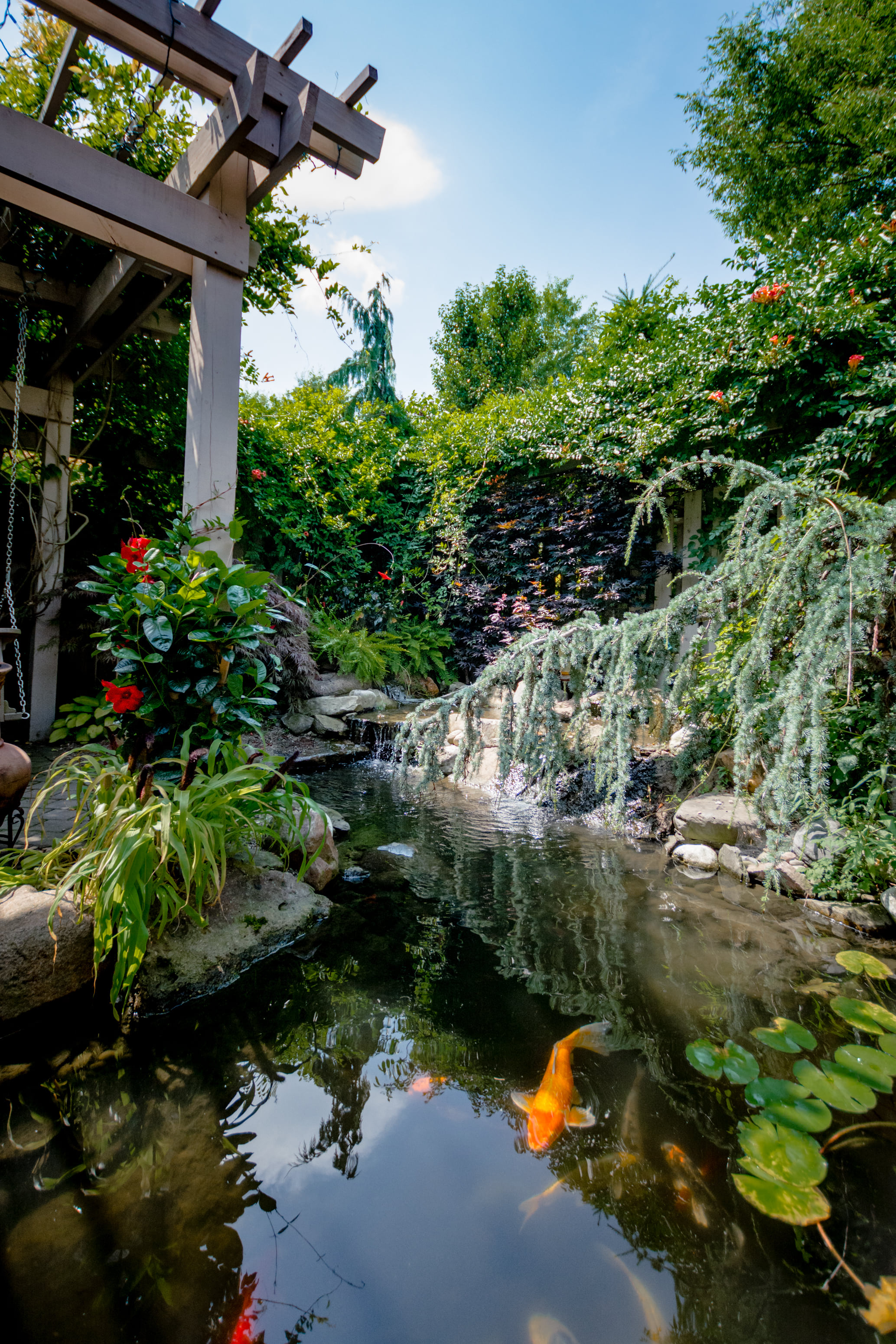 Gold Fish And Koi Pond Design And Construction H2oasis