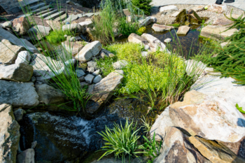 Backyard patio and water feature design