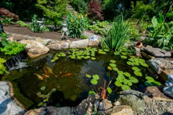 Koi pond installation in Hollidaysburg