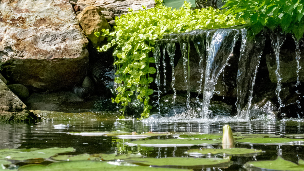 Pond Maintenance & Cleaning Service