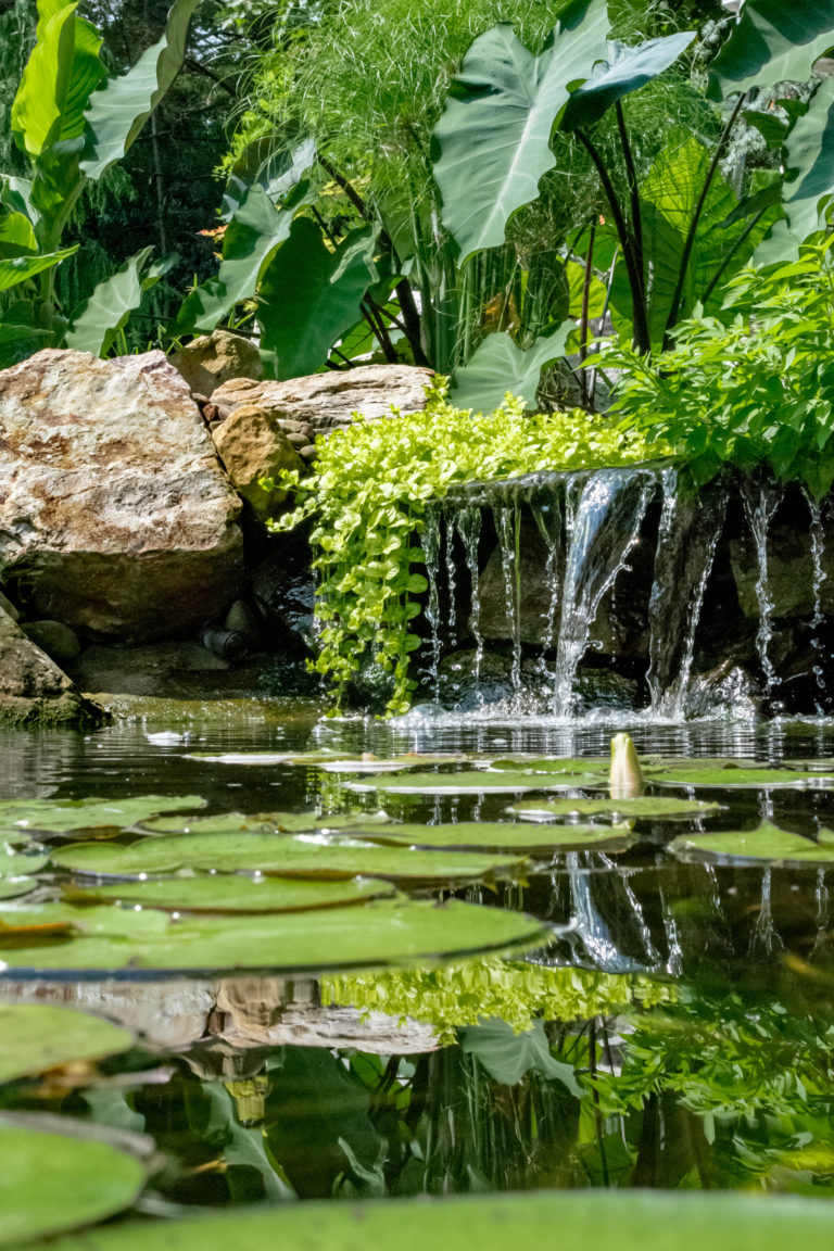 Small waterfall emptying into our pond installation