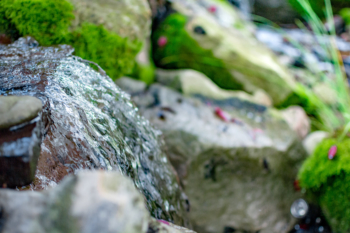 Close up shot of one of our best waterfall installations